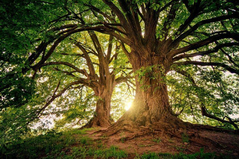 tree nature wood 3822149 e1592372279162
