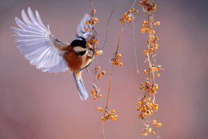 bird, fluttering, berries